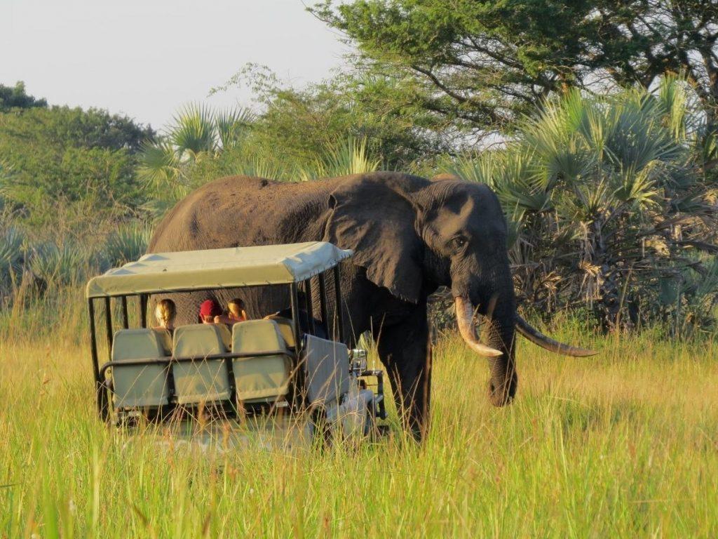 Tembe Elephant Lodge